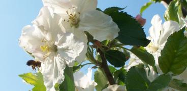 Blütensternwanderung 23.04.2017 in Remchingen