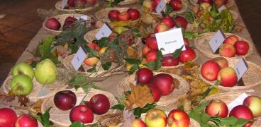 """14. Obsttag """"Rund um Obst & Gemüse"""" 15.10.17"""